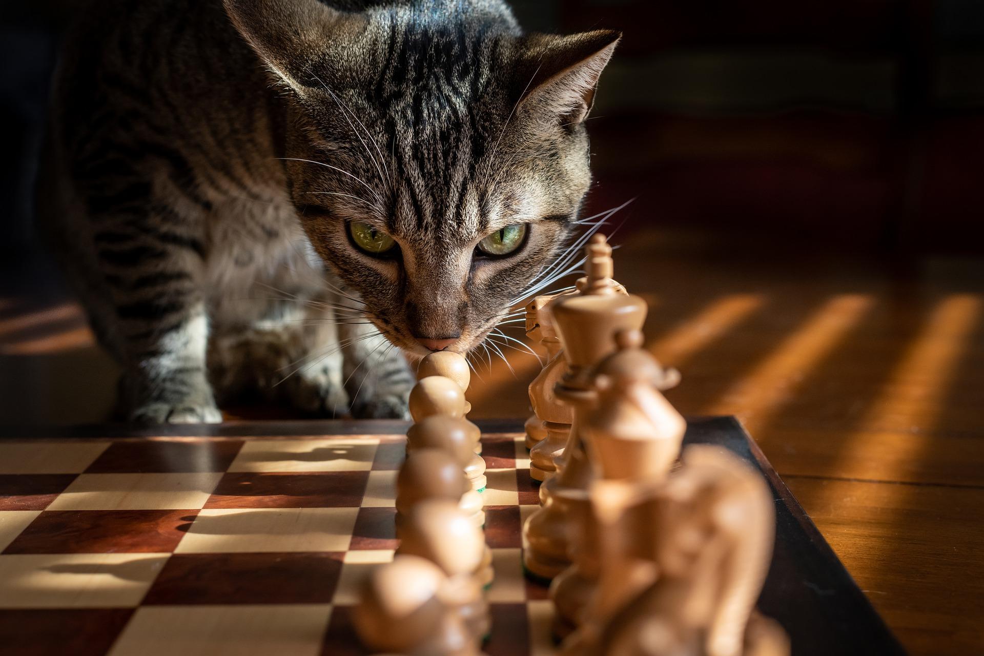 Mikor lehet jó ötlet egy kültéri sakk rendelés?